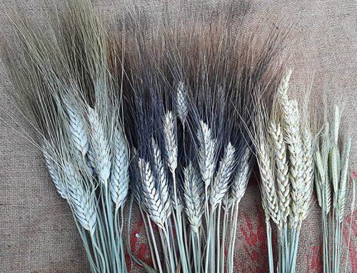 La forza della farina non ci interessa