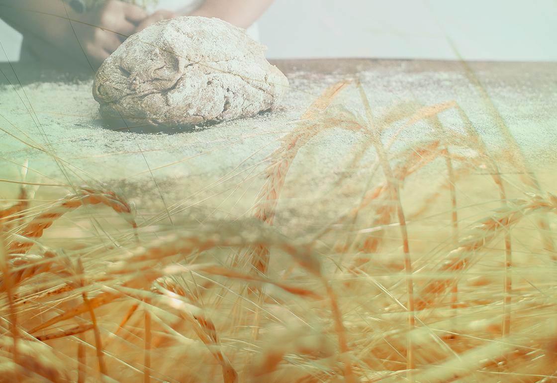 impasto di farina di grani antichi