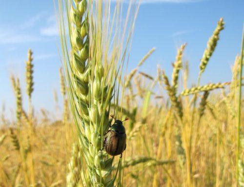 Zero pesticidi: missione compiuta