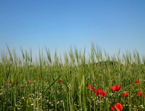 La biodiversità e la tutela delle risorse naturali
