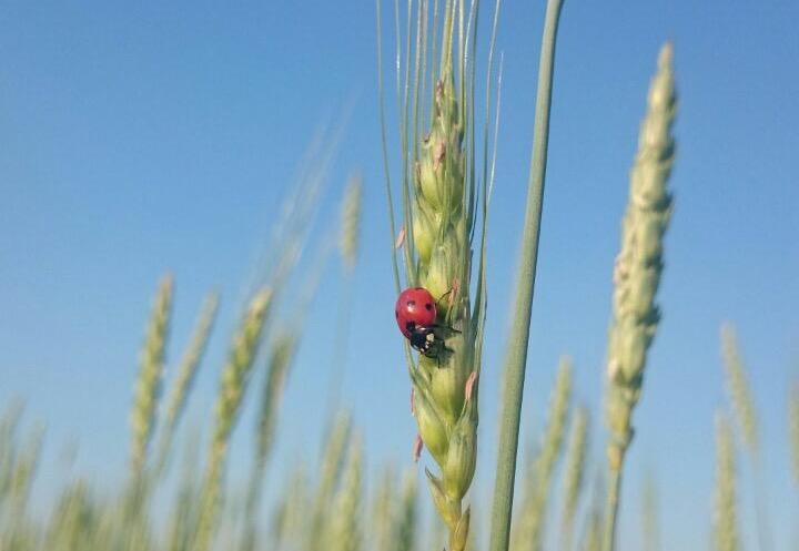 Biodiversità. Prezzi giusti per un pianeta sano